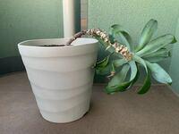 観葉植物のアガベのまっすぐな育て方について。 もう5年くらい育てていますが、写真のように傾いています。  今までの経緯  暫く部屋の隅の日の当たりづらいところに置いていたため、日の当たる方へ横向きに伸び...