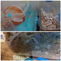ペットのハムスターが寝床でおしっこをします。 現在2歳半になるキンクマハムスター(♂)がいます。 画像のようなケージで巣箱が離れにあるのですが、最近ずっと巣箱でおしっこをします。 前はちゃんと砂場でおしっ...