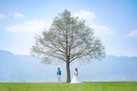 【滋賀県の撮影スポットについて】  この度結婚式の前撮りを自分たちで行おうと思い 滋賀県の琵琶湖沿いでどこか言い場所がないか探しております。 ellepupa様のサイトで 滋賀県の琵琶湖の南側に添付画像のようなところがあると拝見したのですが こちらはどのあたりになるのか 具体的な撮影場所がお分かりになる方はいらっしゃいますでしょうか。  ちなみに参考URLは以下の通りです。...
