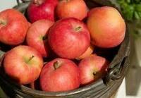 加熱していても美味しい林檎のレシピ。  林檎自体は好きです。たぶん、ナマの時のあの爽やかな香りや「しゃくっ」とした歯ごたえが好きなんだと思います。 一方で林檎ジャム、林檎のコンフォート、アップルパイ...