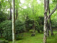 京都嵐山の祇王寺で撮った写真のように思いますが、確証が持てません。写真は2009/7/21です。 京都嵐山で撮った写真に間違いありません。わかる方がいらっしゃれば特定お願いします。