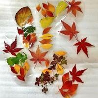 落ち葉は好きですか?  落ち葉を拾い集めて何かを作ることはありますか?