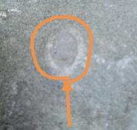 化石好きな子供が、河原で見つけてきた石です。  この白いものは何でしょうか…?