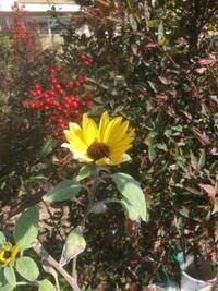 この添付画像の花の名前を教えて下さい 先程質問しました黄色い花の別角度です、本日撮影しました