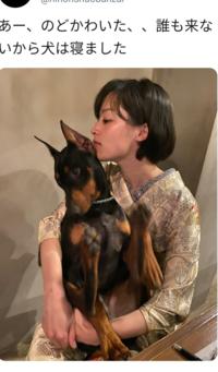 飲食店なのに犬とか連れてきて提供する女将が抱き上げたりしてるの無理だと思ってしまうのは、私が心が狭いのでしょうか。
