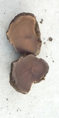 牛ふん堆肥を買いました。 塊が結構ありほとんどが黒い塊なのに少しだけ白っぽい塊があります。 包丁で切ってみると写真のような感じです。 これも糞なのでしょうか。 写真のは茶色ですがもっと 白いのもあります。