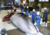 あなたは日本の商業捕鯨を支持しますか?