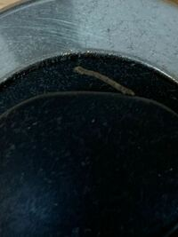 これシャクトリムシですよね? ヤカンの蓋についてました 小枝に擬態しているようでピクリともしませんが… 擬態はどれくらいの時間で解かれるのですか? なぜシャクトリムシが台所にいたのでしょう?