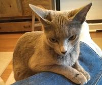我が家の猫ちゃん壱号はかわいいですが、 とても気難しいです。   貴方のうちの猫ちゃんはどうですか?