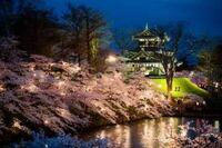 高田城の桜ライトアップ を見に行こうか迷っています。 行ったことがある方に教えていただきたいです。 さくらロードのライトアップ は中止ですが、三重櫓ライトアップ とぼんぼり点灯はあるようです。 ぼんぼり点灯だけでは、このような桜と三重櫓の一緒の写真は撮れないでしょうか? さくらロードライトアップ がなくてぼんぼり点灯のみというのでどの程度の夜景がみれるのかわからず旅行を迷っています。 もしア...