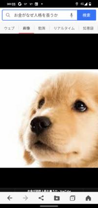 ゴールデンレトリバーを無理矢理日本語にしたら金犬ですか?
