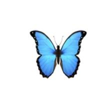 この蝶の絵文字はなんと検索したら出てきますか?機種はiPhone8です。 教えてくださいお願いします。  もし、分かりづらいものでしたら詳しく教えていただけると幸いです。