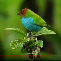 地球上の野鳥にお詳しい方へお伺いをいたします。 ・ 世界の野鳥の中で、カラフルな鳥と感じ取れる鳥がいると思います。 ・ これが一番カラフルと思える鳥を貼りつけていただければと思います。 もしくはURL...