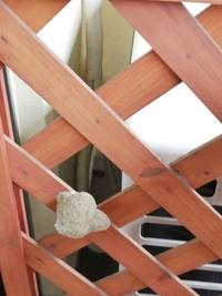 室外機のカバーに何か巣のようなものがありました。  これ何か分かりますか?