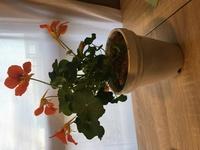 花の種類について  友人から花をいただいたのですが、花の種類がわからずにどうやって育てていいのかわかりません。  どなたか花の種類が分かる方回答をお願いしたいと思っています。