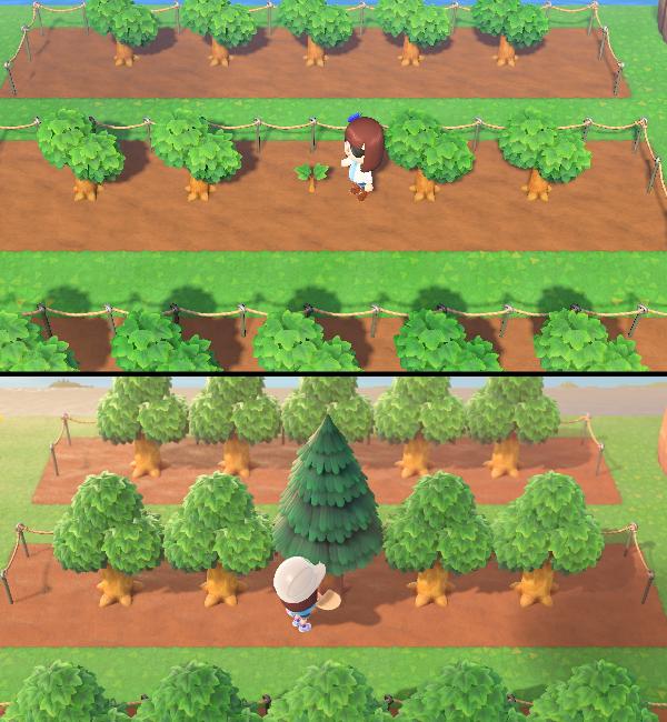 木 植え 森 あつ 替え の