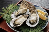 牡蠣はどうやって食べるのが好きなの?  1、生牡蠣 2、カキフライ 3、牡蠣鍋 4、牡蠣のチャウダー 5、牡蠣のオリーブオイル漬け 6、その他