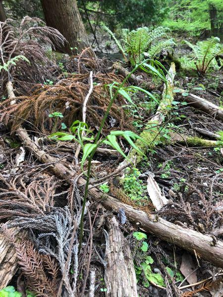 野山で見つけました。これは何という植物でしょうか?