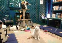 猫べや 猫カフェに行った事ありますか? わたしはあります