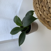 スリーコインズで、観葉植物を買ったのですが植物名が書いてある紙を捨ててしまい、名前が分からず困っております...こちらの植物の名前は何でしょうか?