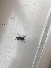 何虫でしょうか? 家の前で見つけました。
