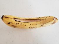 バナナが…  バナナが勝手に裂けています。  今朝は裂けていなかったのに、こんなことってあるのでしょうか?!  食べないほうがいいですか??