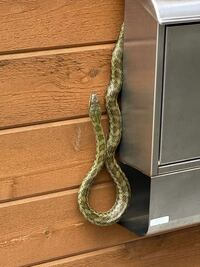 このヘビって何ヘビですか? 毒はありますか?