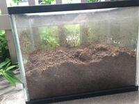カブトムシの卵〜幼虫になったものを、昨年夏終わり幼虫からはじめて育てています。 幼虫は7つくらいから、5つくらいに減ってしまいました。 土は一度変えただけなのですが、今また変えるか、それとももうそろそろ成虫になるのかな?とちょっとよく分からないで見ています。  この時期に、土の補充は必要でしょうか? 水槽の半分か、ちょっとしたくらいです。