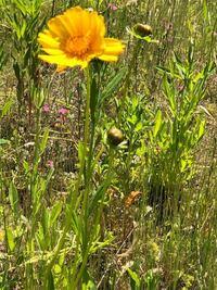 宿根草、多年草に詳しい方にお願い致します。 今時期咲いてる此方のお花の名前を教えて下さい。 宜しくお願い致します。