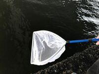こういうので小魚では無くアジやサバなど大きい魚は堤防で捕獲できますか?