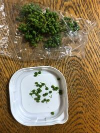 山椒の実を効率よく取る方法ってありますか?