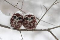 フクロウの画像なんですがこの子達はCGですか。それとも本物でしょうか。