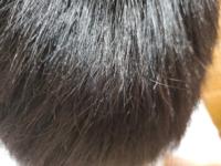 ※切実な悩みです。少しでも多くのご回答お待ちしております。 よろしくお願いします。  男です。 4ヶ月に1度ほど縮毛矯正をし、2ヶ月に1度ほど白髪染めをしています。 (どちらとも美容院で)  毎日のトリートメン...
