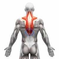 背中の筋肉痛について教えてください。 画像の青丸の辺りについてです。  姿勢を正していると平気なのですが、背中丸めると筋肉が突っ張るような痛みを感じます。 嫌な痛みではないです。 背筋を頑張っているので...