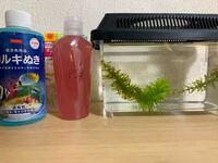 メダカの赤ちゃんを4匹と飼育セット頂きました!! 針子×4ヒメタニシの赤ちゃん×2アナカリス PSB溶液・カルキ抜き・メダカの稚魚用の餌 酸素ブクブク君です!! 毎日、スポイドでそこに溜まったゴミを取り減った量の水をカルキを抜いて足す(PSB溶液も)餌は朝と夜に与える と言われました。 他に気をつけることは有りますか?