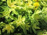 植物(花?)の名前を教えて下さい。