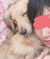 ミニチュアダックスの男の子を飼っています♪ すごく甘えん坊で可愛くて仕方ないです。笑 ミニチュアダックスって本当に甘えん坊ですよね。  いつも肉球と耳の匂いが大好きで毎日嗅いでいま す♡ どこ触っても全く怒らないのは飼い主を信用しているからでしょうか? 皆さんはワンちゃんの匂い嗅ぎますか?  犬のお世話は大変だけど可愛くてそんなことも忘れてしまいます。笑