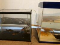 鯉とフナの水槽飼育について。 飼育方法についてアドバイスお願いします。   2回に分けて釣ってきた鯉とフナを、時期別の水槽で飼育していました。 内訳は以下の通りです。 A水槽 1.5カ月前〜:①15cm鯉 1匹 ②7〜10...