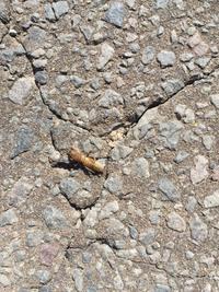 虫の名前を教えてください。庭にいた虫です。体長5cm程度です。土の中10cmにいました。