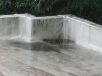 マンション屋上の排水口詰まり 梅雨時期になり雨降り中に屋上を見たところ、 一部分で排水口が詰まり屋上に水が貯まっています。 1、これは水漏れ原因になる程度の貯まり方でしょうか? 傍に大きな木があり枯...