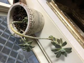 観葉植物,室内,名前,外