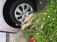 この植物の名前を教えて下さい。とても綺麗でした。雑草ぽいですが。。。