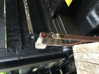 玄関にいた虫なのですが、この虫の名前と特性を教えてほしいです