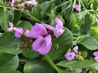 この花の名前を教えてください。 海・山に近く、地面から10cmほどのところに咲いてました。 今の季節です。 アプリで調べるとヌスビトハギとでたのですが、葉が違うなーと思いまして。。 合 ってるのでしょう...