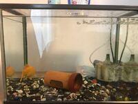 金魚の水槽が殺風景なので水草を入れたいのですが、あまり大きくない水槽なので水草を入れると金魚が泳ぎにくいでしょうか?