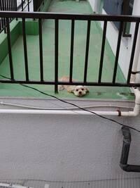 このわんちゃんの犬種は何でしょうか? わかる方教えて下さい!  かわいいなぁ…かわいいなぁ