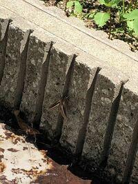 ベランダにこんな虫がいてるんですが、なんの虫ですか? 刺したりとかするんでしょうか、、、