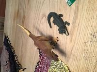 ティラノサウルスとナイルワニどっち強いんすか? こっちは「ティラノサウルスかな〜。」と思います。皆さんはどう思いますか? 回答してください。今日買ってきたジュラシックワールド恐竜パズルの上でナイルワニとティラノサウルスが置いてあります。あと、恐竜(ティラノサウルス)あとワニ(クロコダイルの仲間)の見分け方は何ですかってことも教えて下さい。回答よろしくお願いします。 ↓ティラノサウルスとナ...