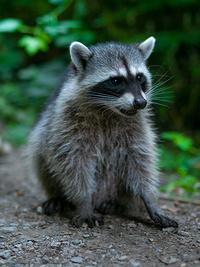 被写体の被写界深度と背景のボケについてです。  現在、身近な野生動物を撮ることが多いのですが、作例はオリンパス45mmF1.8を絞り開放で撮っています。 一般的な野生動物に比べ、かなり撮影距離が近いことから...