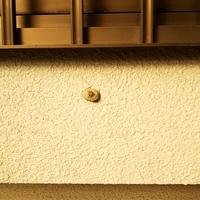 家の外壁に一日で完成していたのですが、なんの虫の巣でしょうか?!